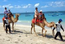 ya-camel-adventure